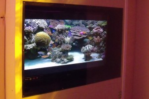 Calming Room Digital Fishtank - impact resistant