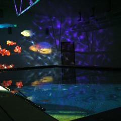 Interactive Sensory Pools